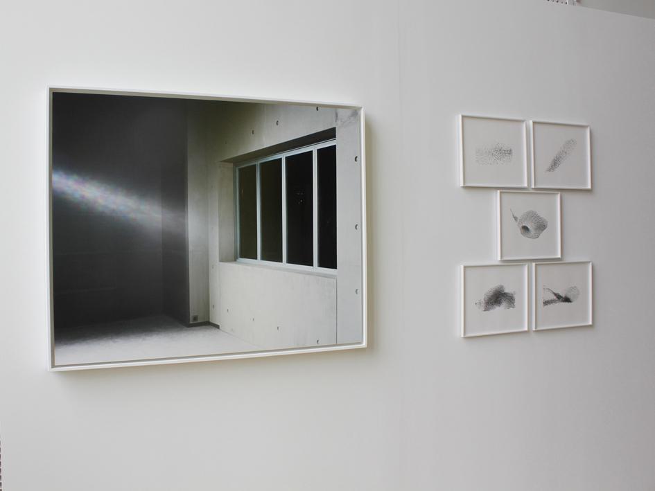 murmuration-02-2012-net